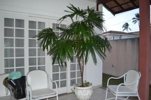 Colombina na varanda dos fundos de casa